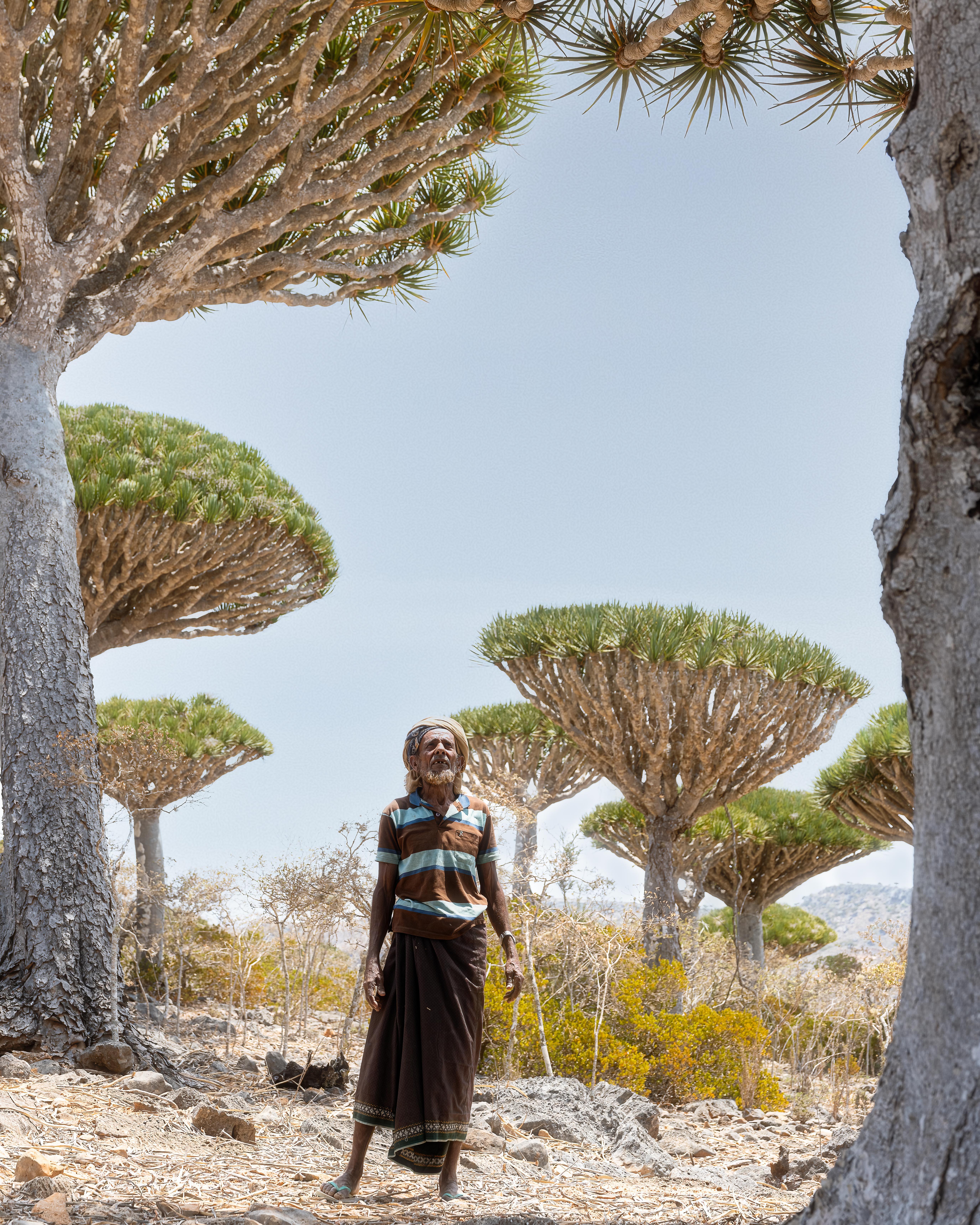 A local Socotri man