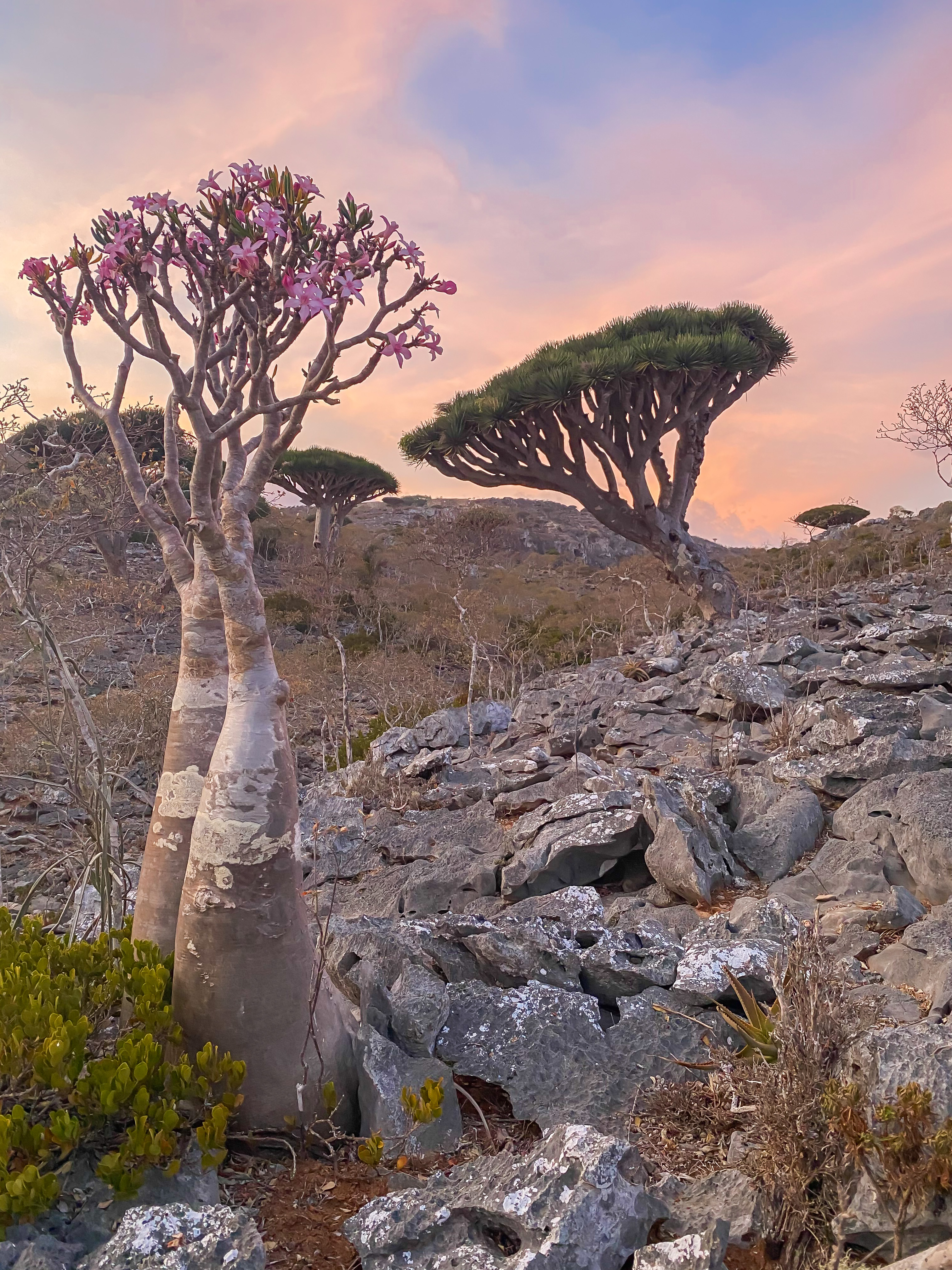 Explore Socotra - Travel to one of the most undiscovered places!