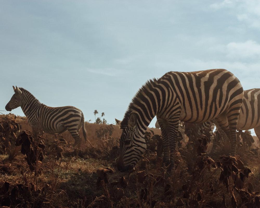 African Travel Bucketlist